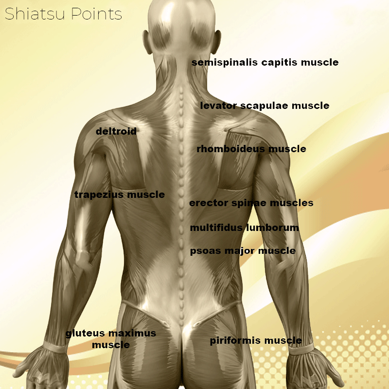 Shiatsu Points Massage